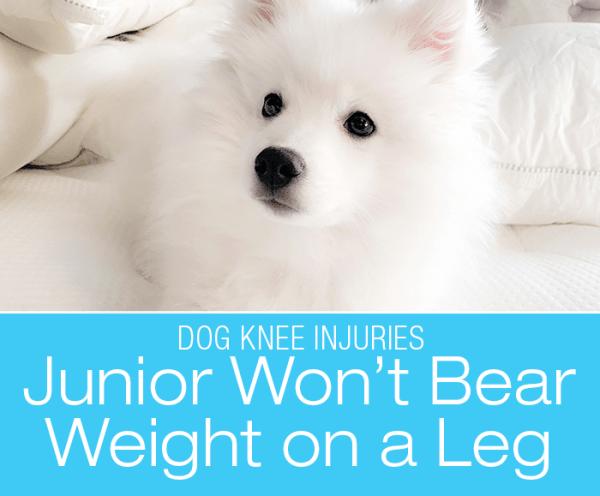 Small Dog Knee Injury: Junior Stops Bearing Weight on his Hind Leg