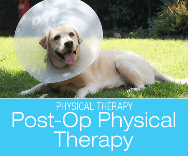 Canine Post-Op Physical Therapy: Best Practices After Your Dog's Surgery