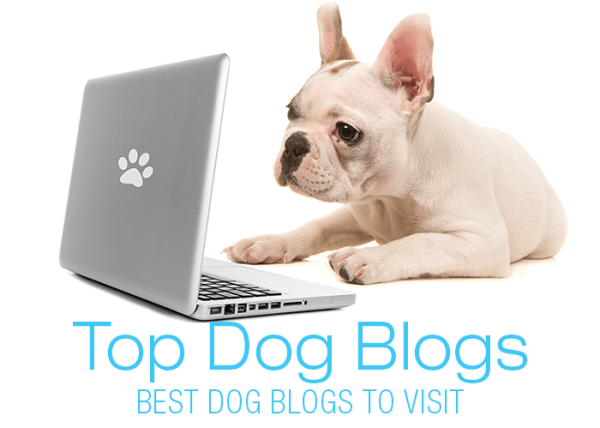 Best Dog Blogs of 2020