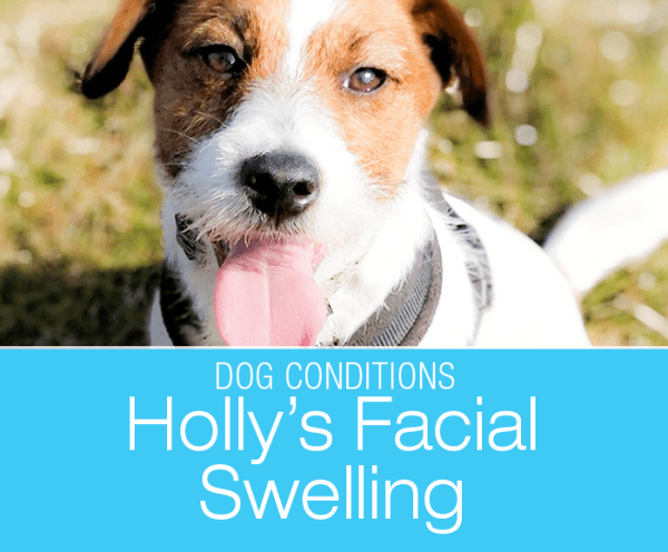 Swelling under a Dog Eye: Holly's Strange Bump