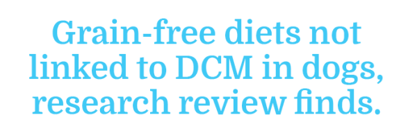 Canine Diet-Induced DCM Revisited: Results of the Research Review Looking at the Recent Rise in Dilated Cardiomyopathy in Dogs. Grain-free diets not linked to DCM in dogs, research review finds.