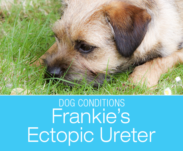 What Is an Ectopic Ureter: Frankie's Urinary Incontinence and Reconstructive Surgery