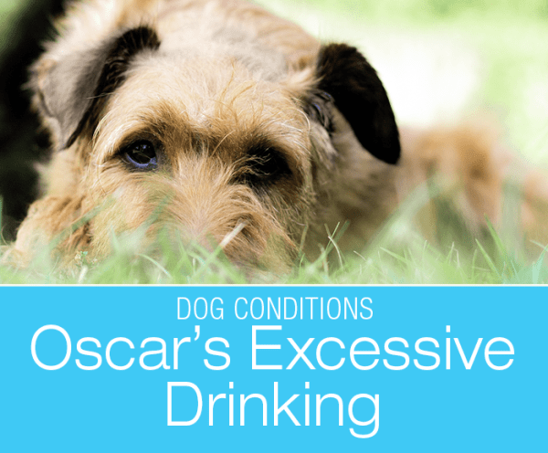 Excessive Thirst in a Dog: Oscar's Increased Drinking and Diagnosis