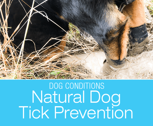 Natural Dog Tick Prevention: Changing Dog Tick Prevention Product but Staying Chemical-Free