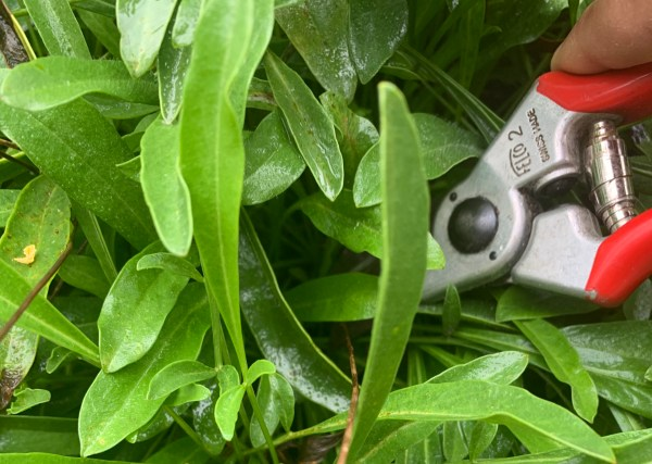 Gardening Consulting