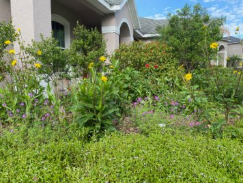 247 front garden image