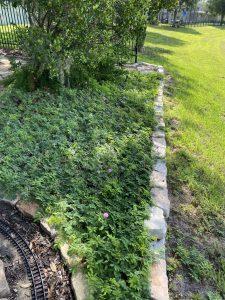 Sunshine Mimosa Garden Bed