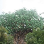Pictures in the Park – The Tree of Life