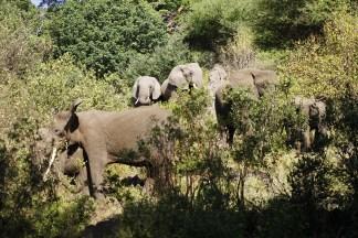 A family of elephants in Lake Manyara National Park.