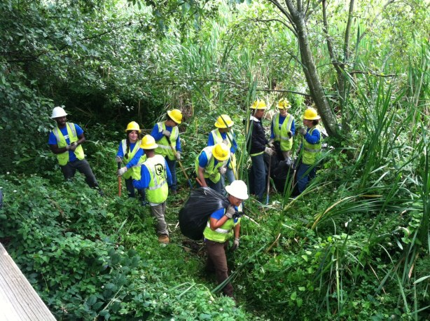Volunteers removes invasive plants in the Edmonds Marsh.