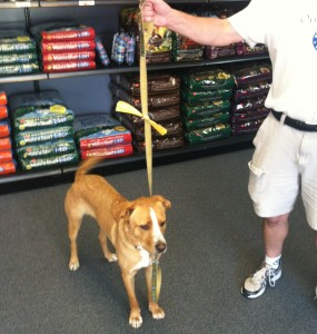 Spikey gets his official yellow ribbon at Edmonds' Blue Collar Dog House Saturday.