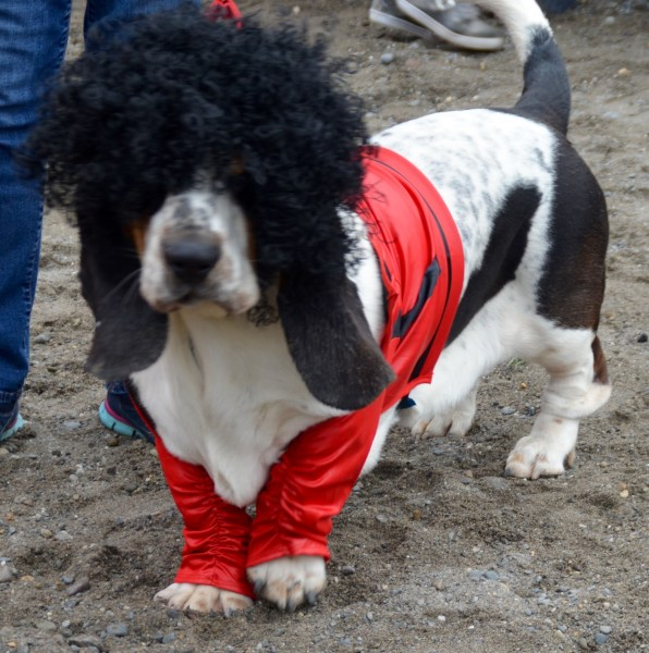 Funniest, first place: Atticus the Rocker Dog.