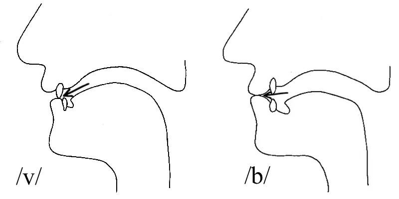 Cómo pronunciar la v y la b con los labios y los dientes