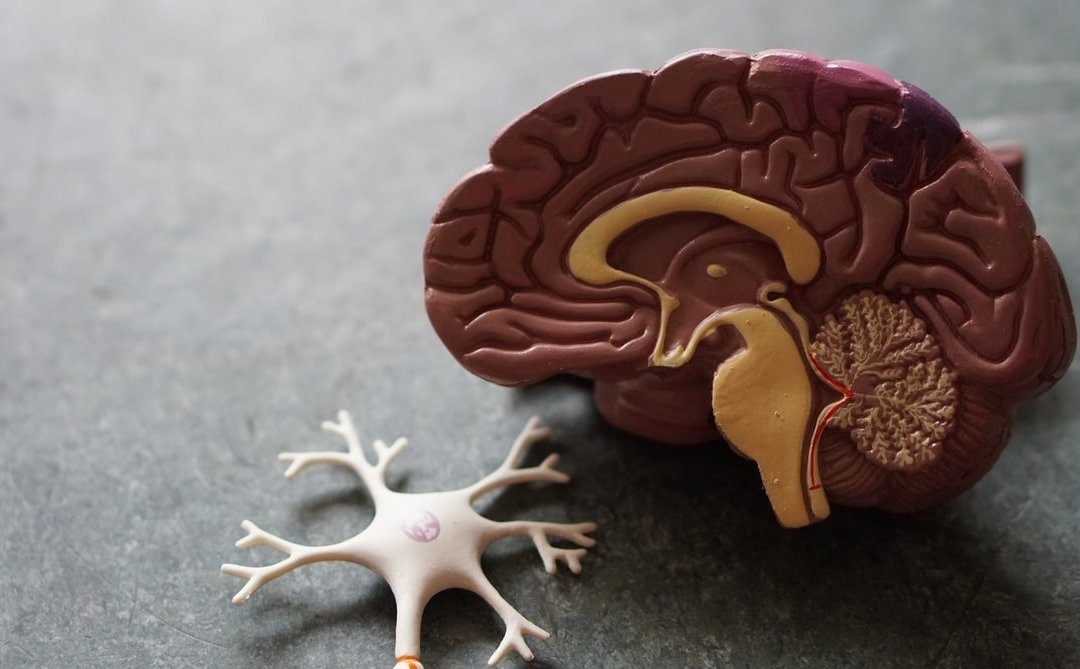 Brain or Heart? It's Both: Alzheimer's Disease and the Cardiovascular System