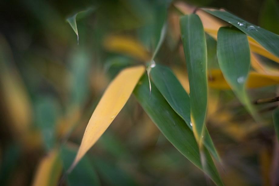 Bambus im Herbst