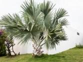 Love this palm
