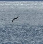 Not very many sea birds