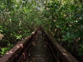 Boardwalk through a mangrove forest to a brackish lagoon.
