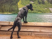 Sky shows off her muscles as she contemplates Rainy Lake