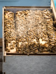 Smoking the bees forces them to move down into the box and makes them less likely to sting.