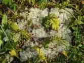 An interesting lichen