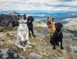 You try to photograph four dogs