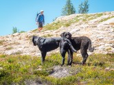 Dogs waiting patiently while a hike heads north on the PCT.