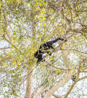 Howler monkey. Lamini is the only place we saw monkeys
