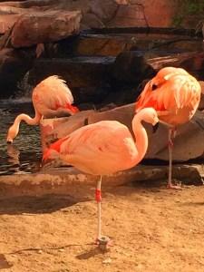 "<img alt = ""flamingo las vegas""."