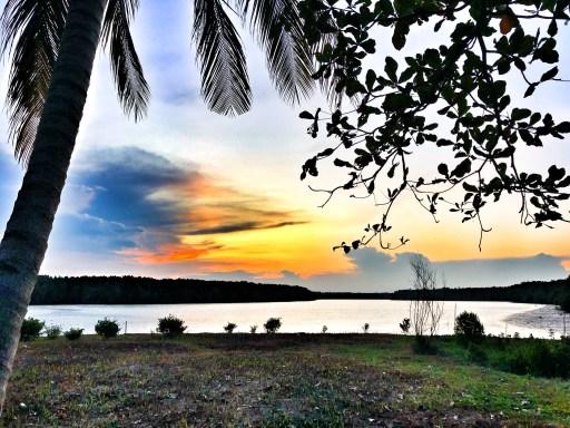Sepilok Borneo Firefly Tour
