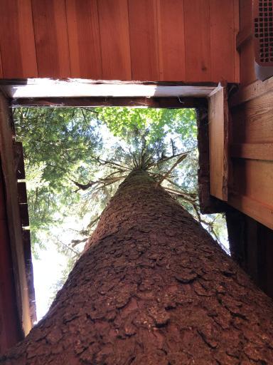 Tree House Spruce Tree