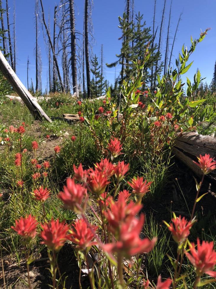 Wildflowers in Idaho