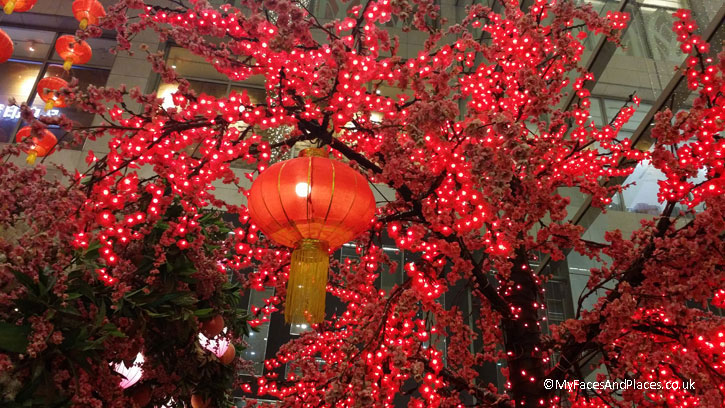 Detail of the Chinese Plum Blossom Tree with a red Chinese lantern as part of the chinese New Year Celebrations.