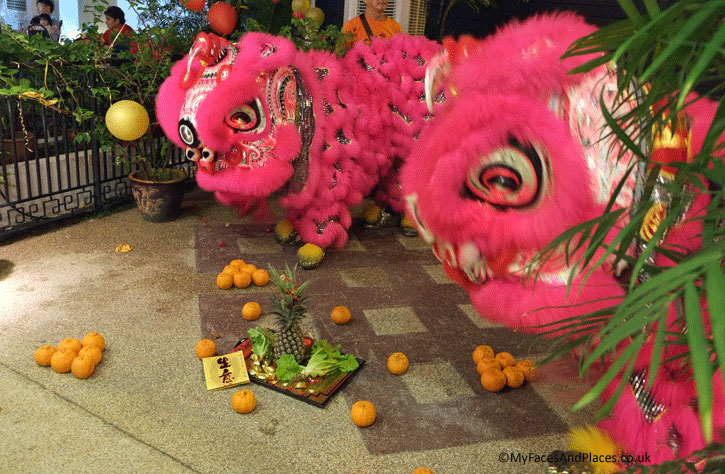 The Chinese Lions are preparing to carry the tray of good fortune for the house owners. The tray holds the pineapple (king of fruits), lettuce (food for the dragon), gold nuggets and oranges (symbols of wealth). This tradition is part of the Chinese New Year Celebrations.
