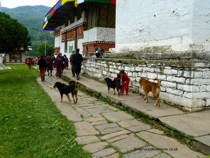 Worshippers circumambulating the ancient temple of Jambay Lhakhang with stray dogs joining in the ritual - Bhutan the Beautiful