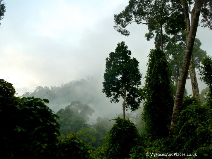 The mysterious misty rainforest of Danum Valley - in Sabah