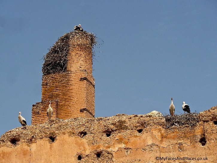Badia Palace wall is a favourite roosting place for the local storks