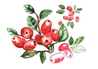 anne-quadflieg-autumn-aquarell