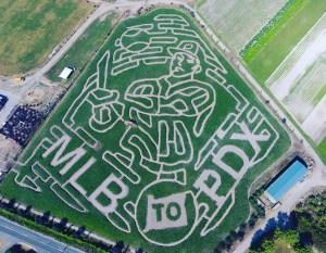 bella organic corn maze