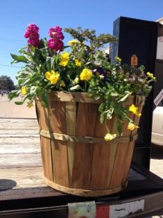 Festival Photo - Plant basket