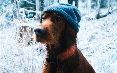 Собака, путешествующая по Норвегии вместе с хозяином