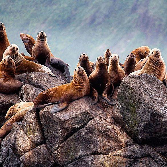 Сотни животных отдыхают на берегу этого российского острова