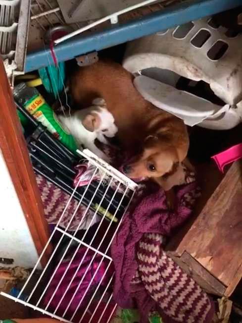 В течении недели они посещали злополучный дом. За это время они спасли еще десять щенков.