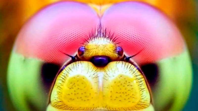 ти фотографии насекомых вас точно удивят
