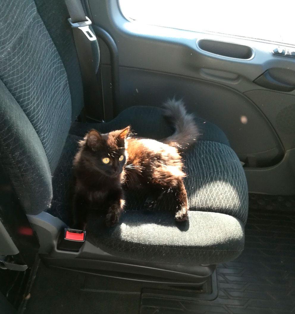 Кошка-дальнобойщик по кличке Шурка