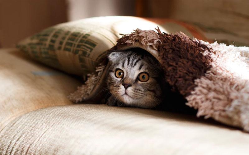Совместному сну с кошкой - нет