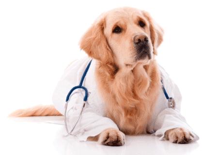 Выбираем ветеринарную клинику для вашего домашнего животного