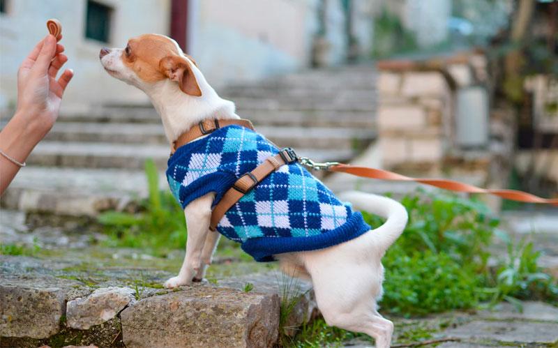 теплая и модная одежда для собак и кошек