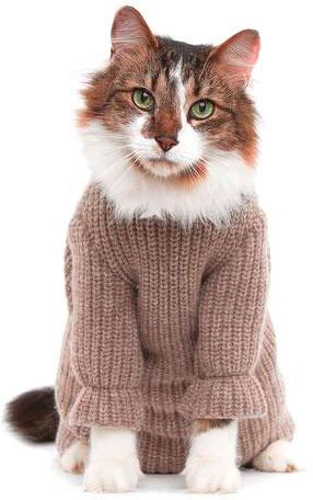 Чтобы ваш любимый питомец не промок и простудился на прогулке, подберите ему удобную, теплую и модную одежду