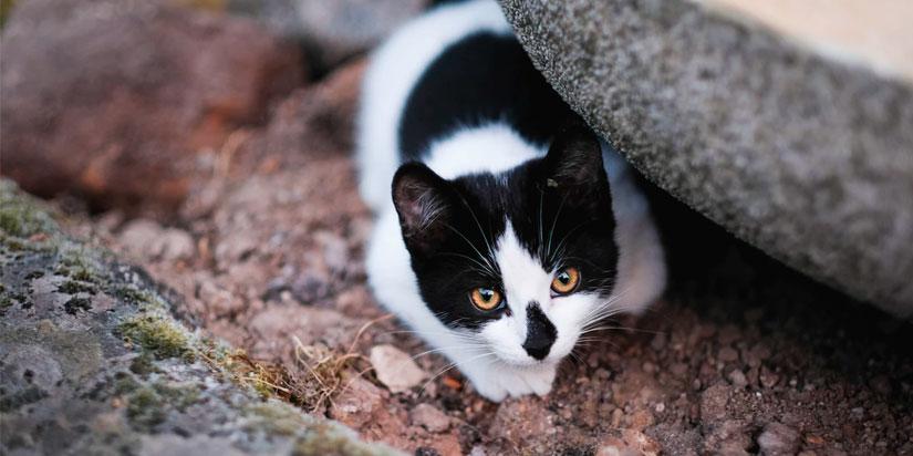 Где лучше начать поиски кошки
